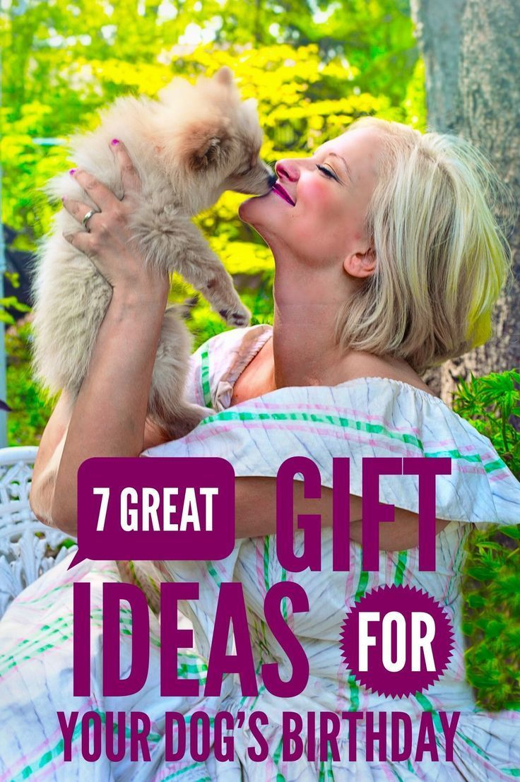 7 great gift ideas for your dogs birthday dog birthday