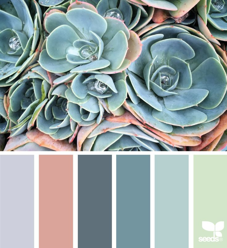 Succulent Hues - https://www.design-seeds.com/in-nature/succulents/succulent-hues-23