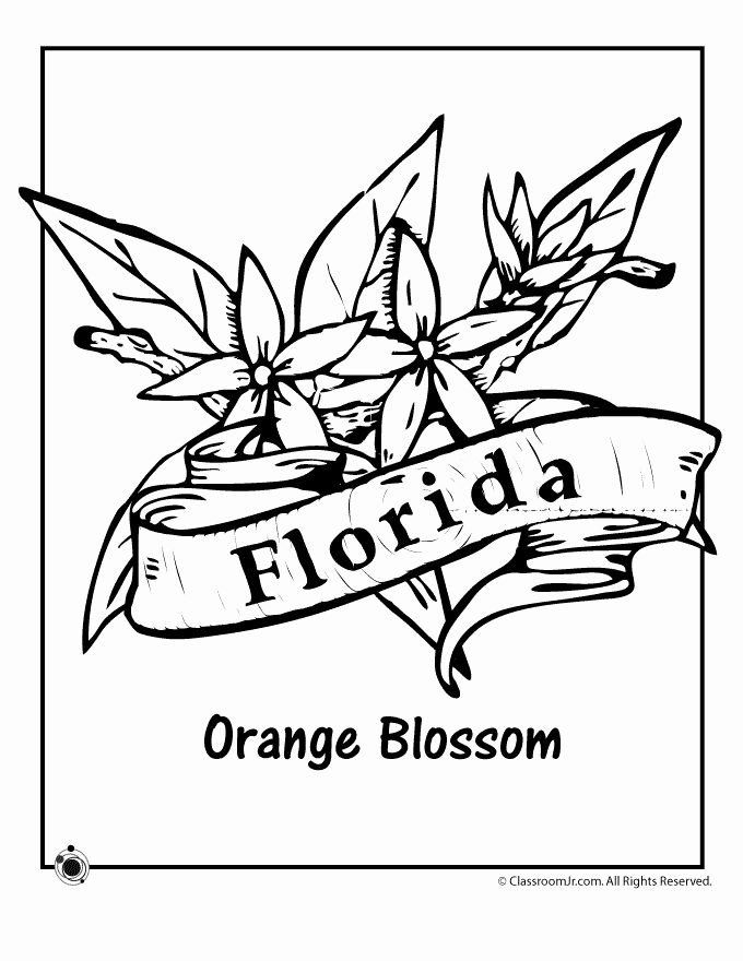 Florida Flag Coloring Page In 2020 Flower Coloring Pages Flag