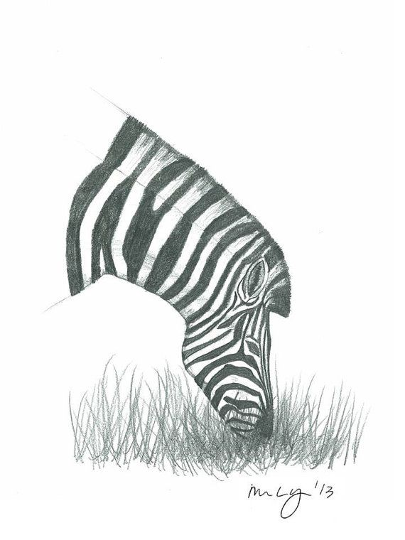 Zebra Illustration all proceeds towards by MegansCozyCreatives, $4.00