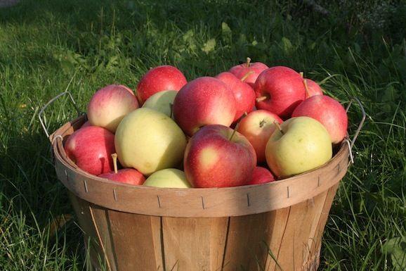 Good Gardening Tips for September