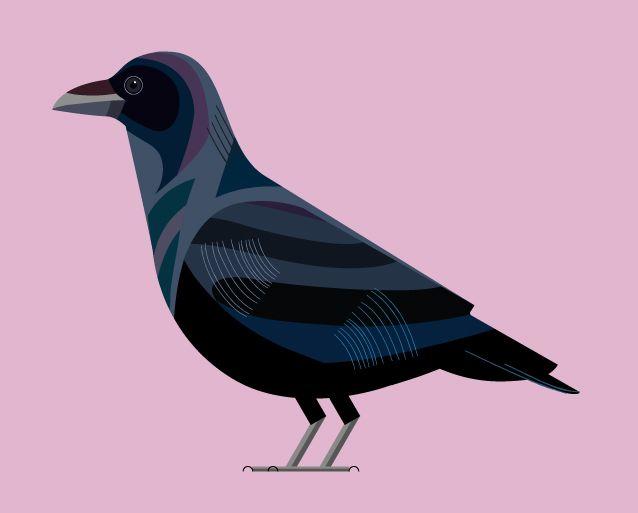 vector illustrated crow, kim hankinson