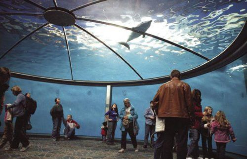 DOLPHIN ADVENTURE INDIANAPOLIS ZOO – Indianapolis Tourist Attractions Map