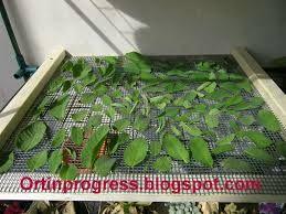 Risultati immagini per essiccare erbe aromatiche
