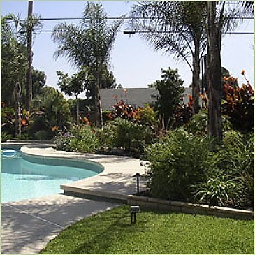 bushes mixed in for pool side tropical look: Pools Side, Outdoor Living, Tropical Pools Landscape, Outdoors Backyard Living, Diy Outdoor, Le Pools, Dreams Pools