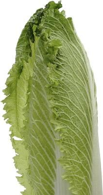 How to make Romaine #Lettuce last longer in the fridge!