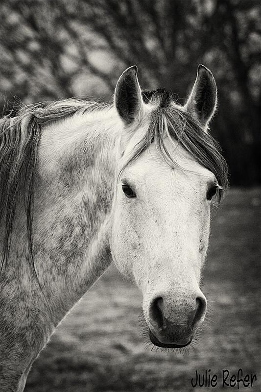 Hello beautiful gray!: Beautiful Gray, Hello Beautiful, Photography