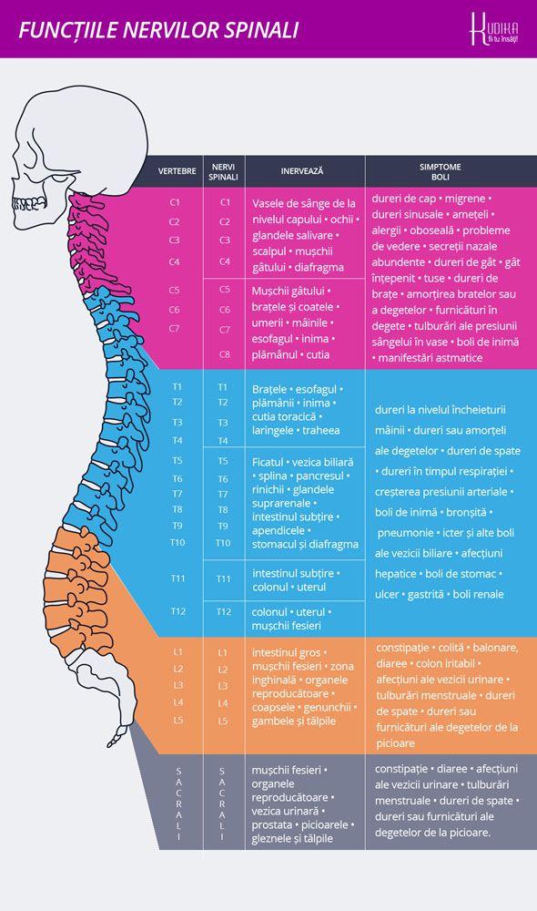 Harta bolilor provenite de la COLOANA. Anumite afectiuni ale coloanei vertebrale pot crea adevarate boli in organism, pot genera dureri si amorteli ori disfunctii de importanta mai mare sau mai mica.