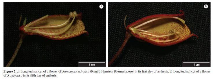 Pollination biology and reproduction of Seemannia sylvatica (Kunth) Hanstein (Gesneriaceae) in the Serra da Bodoquena National Park, Mato Grosso do Sul