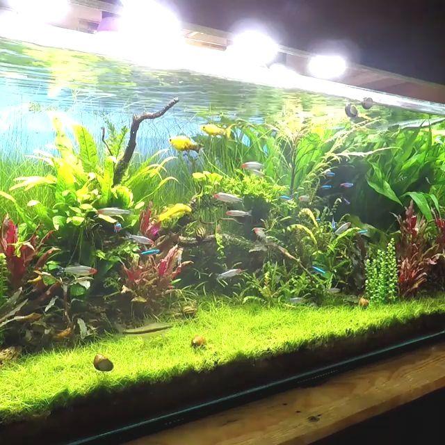 Bonsai Driftwood Aquarium Tree Bsb Random Pick 12in H X 16in L Natural Handcrafted Fish Tank Decoration Helps In 2020 Fresh Water Fish Tank Fish Tank Decorations Tropical Fish Tanks