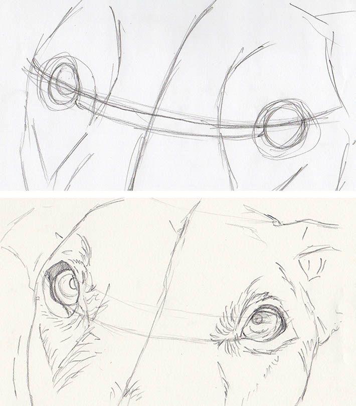 drawing dog eyes                                                       …                                                                                                                                                                                 More