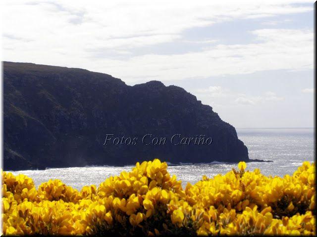 Fotos Con Cariño: Toxos en flor a los pies de La Punta del Limo, en Mayo.