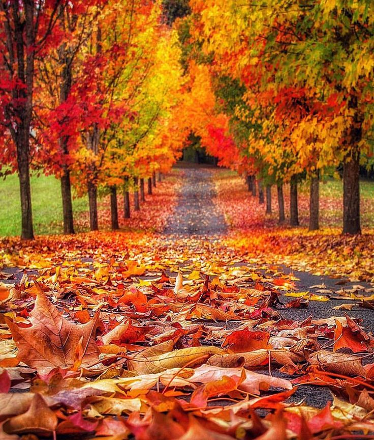"""Oregon, USA Photo by @gemini_digitized"" Autumn Leaves"