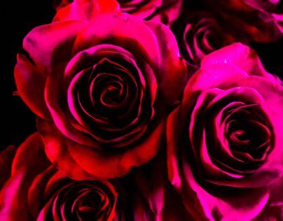 "Ta en titt på @Behance-prosjektet mitt: ""Flowers"" https://www.behance.net/gallery/44207797/Flowers"