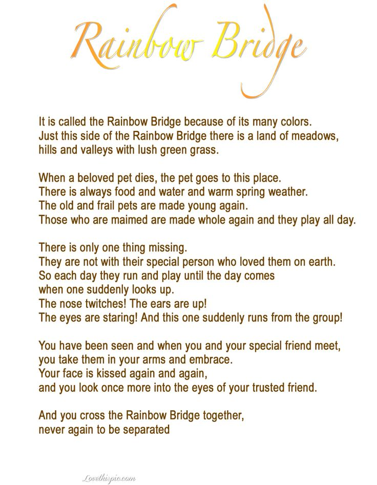 Pet Loss Quotes 54 Best Cardssympets Images On Pinterest  Loss Of Pet Pets And .