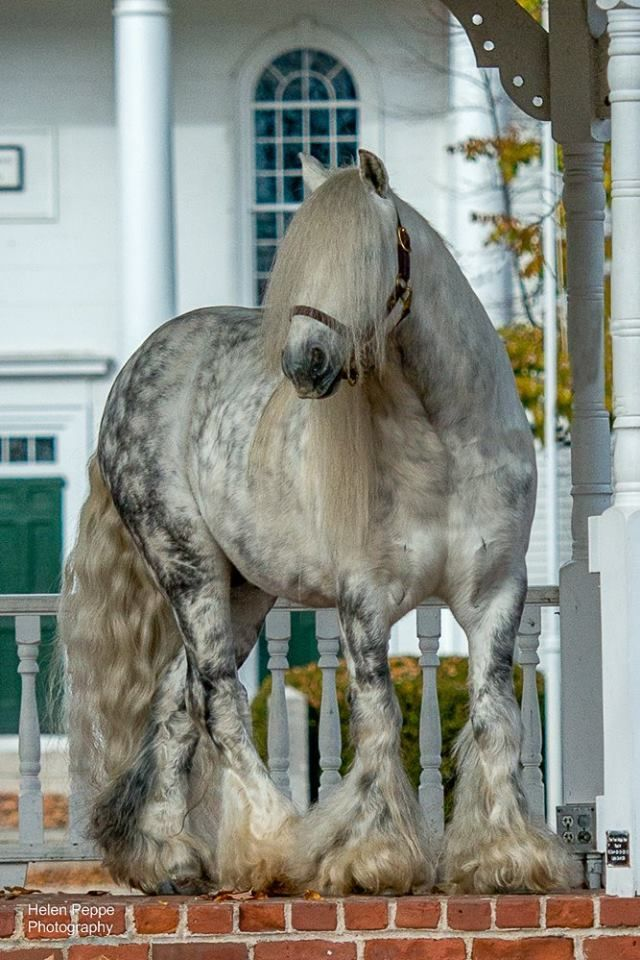 The Most Gorgeous Horses of Different Colors You've Ever Seen. Celebrate Kentucky Derby Day! - grabberwocky