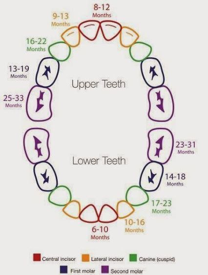 Deciduous Teeth Eruption Chart. Deciduous #teeth, otherwise known ...