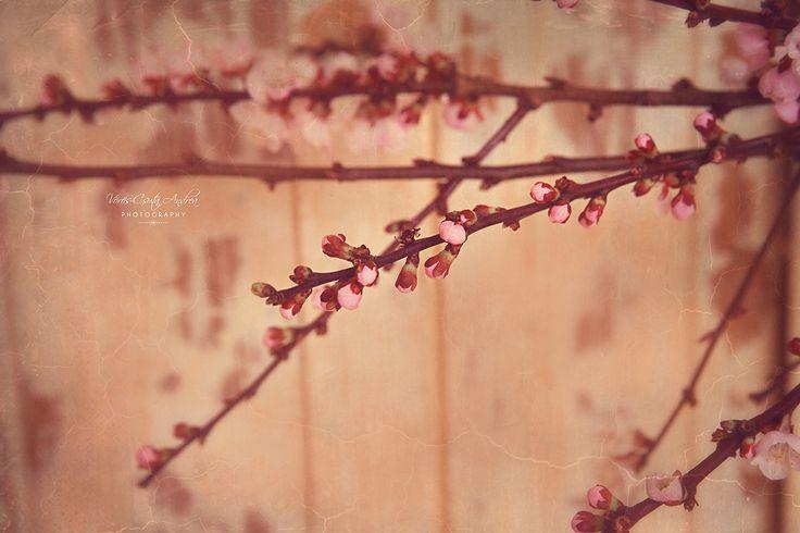 pink spring blossom csutafoto