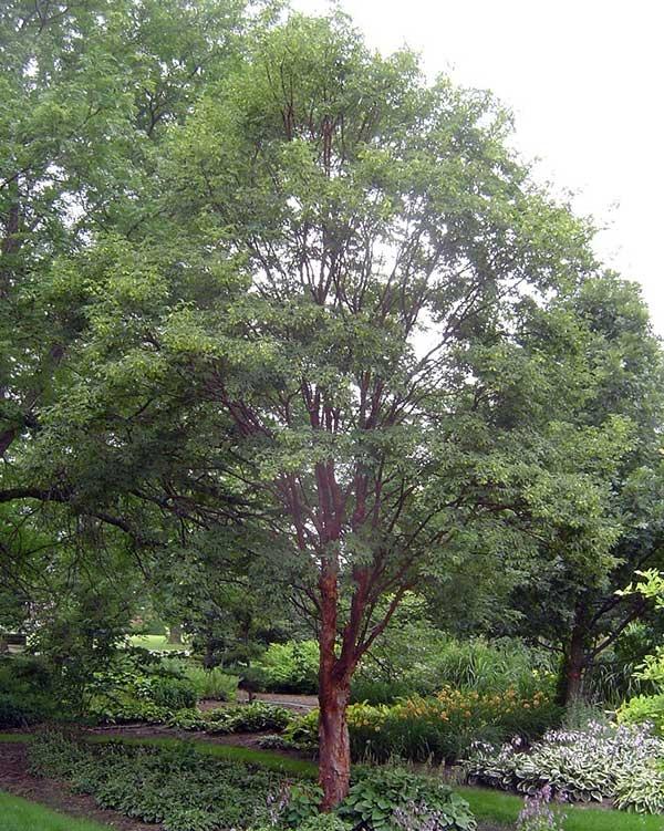 Les 128 meilleures images du tableau trees sur pinterest for Les arbres du jardin