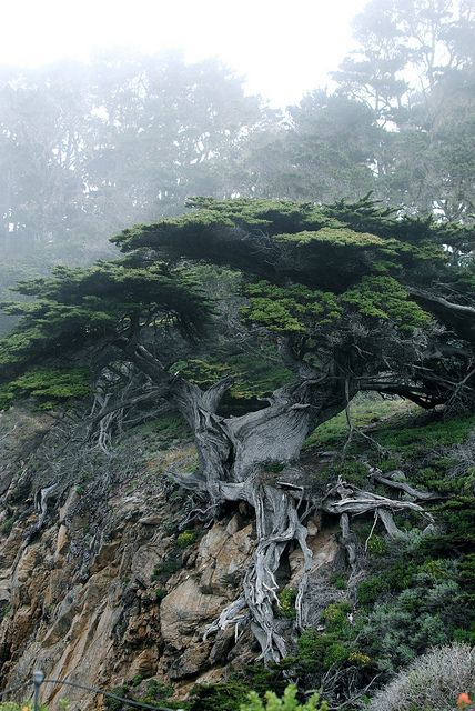 Point Lobos State Park in Carmel, California by waffleslayer on Flickr.