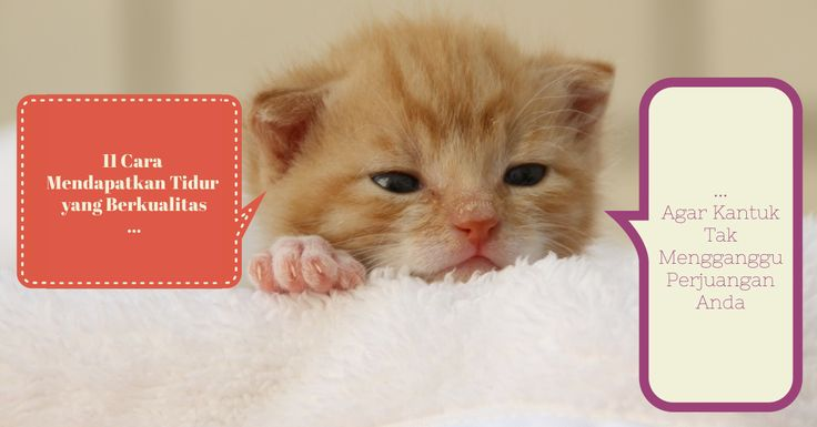 11 Cara Mendapatkan Tidur yang Berkualitas, Agar Kantuk Tak Mengganggu Perjuangan Anda: http://bit.ly/tidurmantep