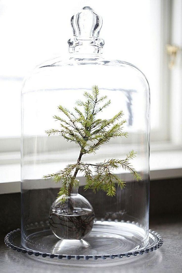 ein immergrüner Zweig in Glasvase unter Glasglocke