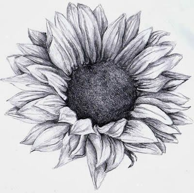 Black and White Sunflower Tattoo Designs | Sunflower Tattoos
