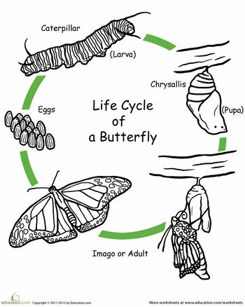 Worksheets: Color the Life Cycle: Butterfly