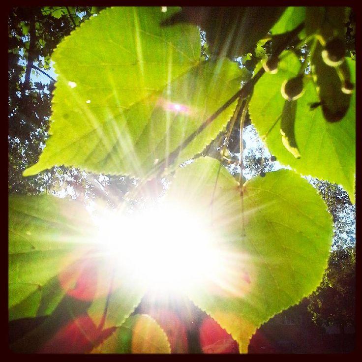 list, jeho, do tvaru srdce, obklopil tvář, oslňujíc září slunce :-) #list #listí…