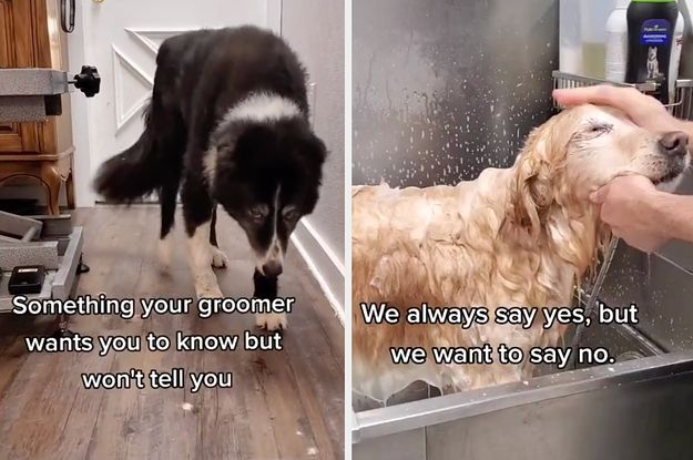 This Things Your Dog Groomer Won T Tell You Tiktok Is Going Viral Because The Message Is So Important Told You So Dog Groomers Groomer
