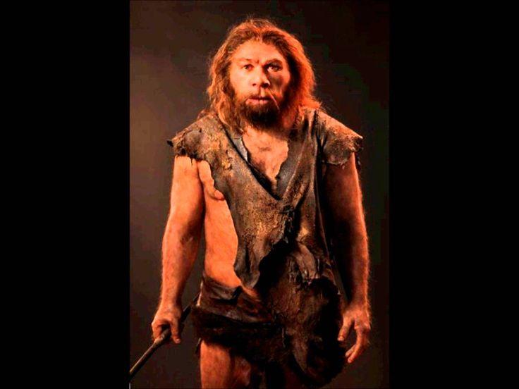 34. Homo neanderthalensis. Características: Esqueleto robusto, extremidades cortas y robustas, tórax en barril,frente baja e inclinada,mandíbulas sin mentón y una capacidad craneal de 1550 cm3, igual o incluso más grande que el de los hombres modernos.Tenían el olfato muy desarrollado y una gran adaptación al frío. Tenía una fonética limitada y la esperanza de vida oscilaba entre 30-40 años.