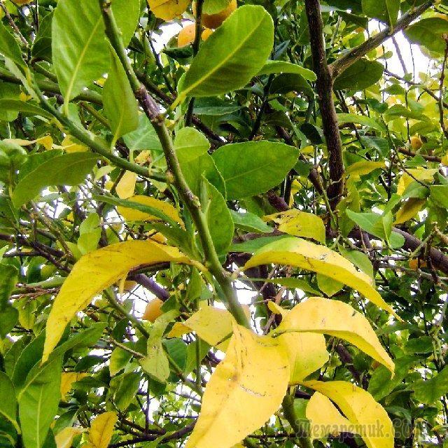Азот, фосфор, калий – признаки недостатка и избытка у растений