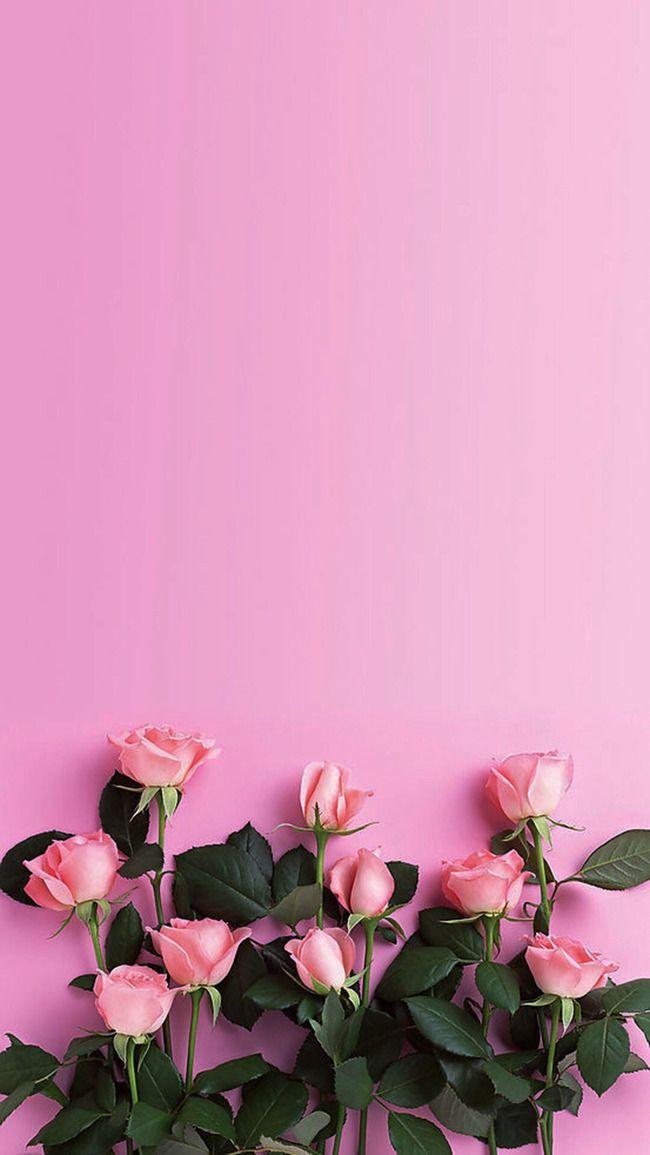 Bocgciolo Rosa Fiori Di Sfondo Wallpaper Nel 2019 Sfondi Per