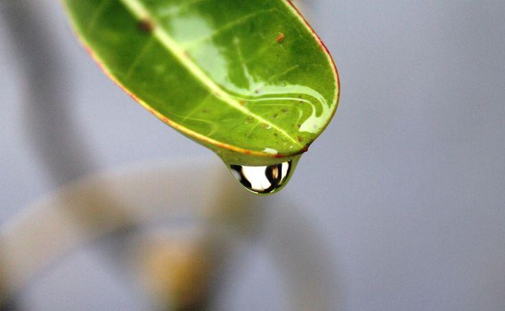 Water on a leaf by Yusuf Fahmi Adiputera on 500px