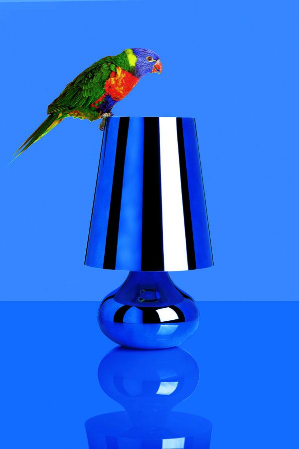 Blue | Cindy by Ferruccio Laviani | Lost in a tropical paradise