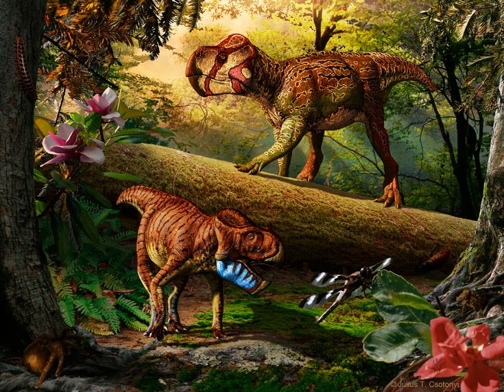 Unescoceratops koppelhusae (upper right) and Gryphoceratops morrisonii (lower left), new leptoceratopsid dinosaurs from Alberta, Canada. [See more artwork by Julius T. Csotonyi]