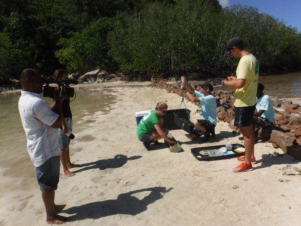 SBC film GVI Curieuse staff & volunteers carrying out our sicklefin lemon shark monitoring for Seychelles news.  #gvi #volunteer