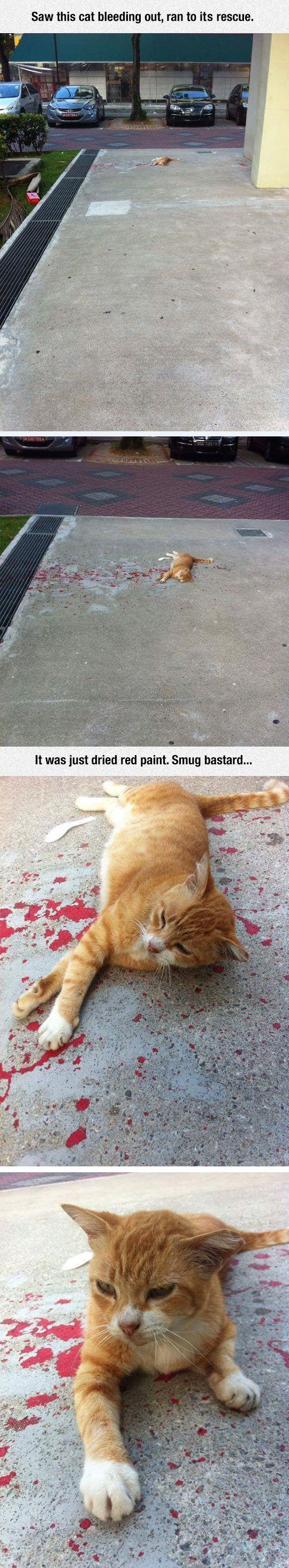 I honestly thought that the cat was dying
