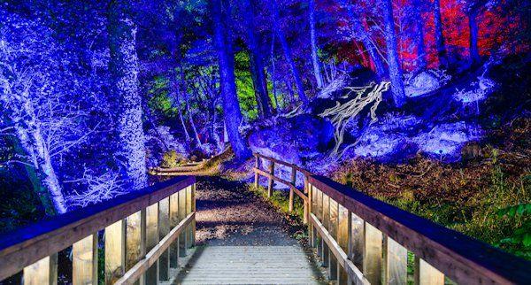 Enchanted Forest Ticket Alerts & Newsletter