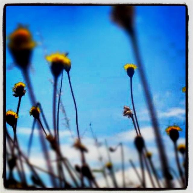 Flores de monte alban