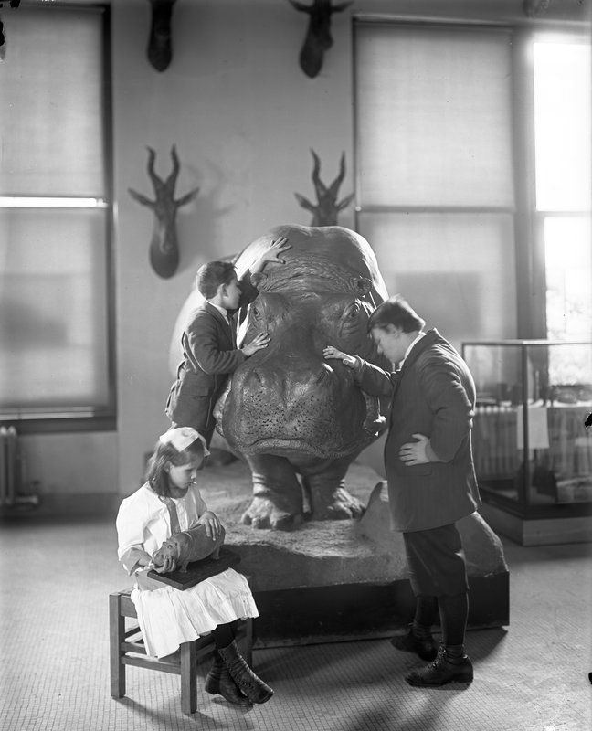 Blind children studying the hippopotamus. May, 1914. American Museum of Natural History