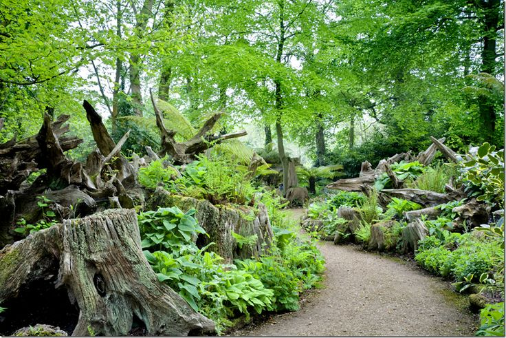 The Stumpery is filled with....stumps and hostas and ferns which grow from the stumps themselves. ...Prince Charles' home, Highgrove