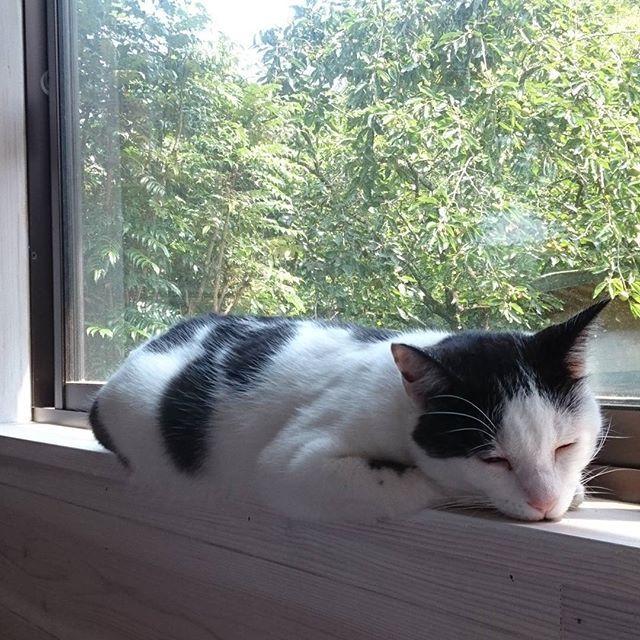 . おにゅなキッチンなれんにゃ~🐱 .  #愛猫 #さわ#キッチン #リフォーム #落ち着かない#居場所が決まらない #窓枠10㎝#猫