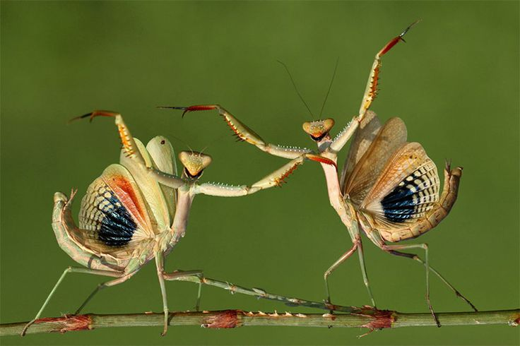 Highlights from the 2014 Sony World Photography Awards Shortlist That's dance by Hasan Baglar 2014 Praying Mantis