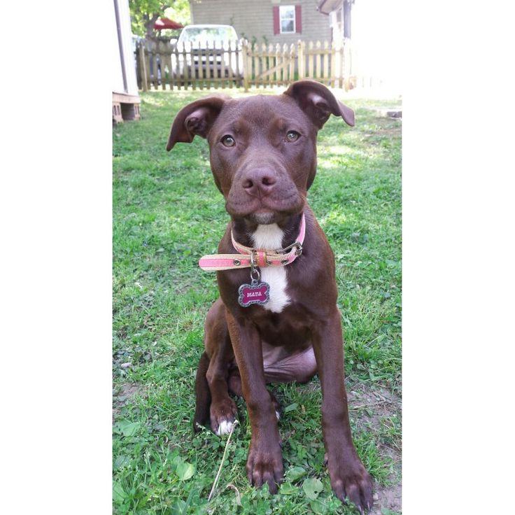 City of nashville pitbull boxer mix nashville dogs