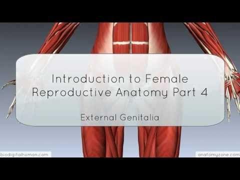 Introduction to Female Reproductive Anatomy Part 4 - External Genitalia - 3D Anatomy Tutorial - YouTube