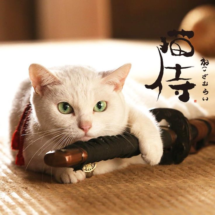 映画とドラマ「猫侍」オフィシャルブログ 昨日見た。 面白いかどうかはともかく、可愛かった。面白いかどうかはともかく。