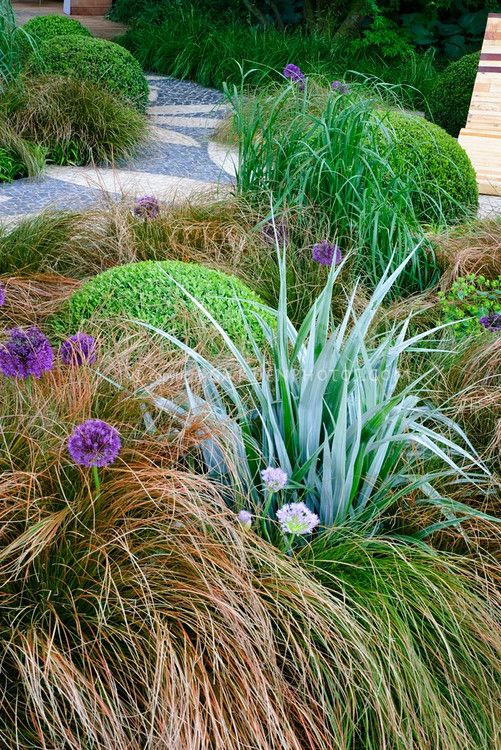 Texture - Astelia, Allium, ornamental grass, Buxus. Brown and blue foliage combos always get me.: Chairs Furniture, Gardens Ideas, Gardens Color, Stones Gardens Paths, Paths Patio, Ornamental Grasses, Patio Decks, Gardens Chairs, Ornaments Grass