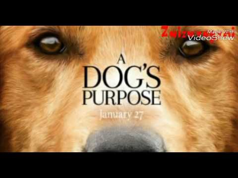 A Dog's Purpose soundtrack - YouTube