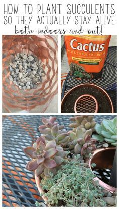 25 best ideas about rock garden plants on pinterest the for How to keep succulents alive indoors